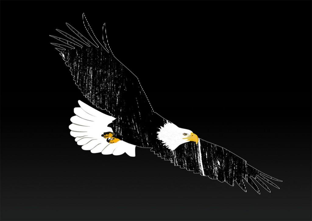 Illustration-eagle-01