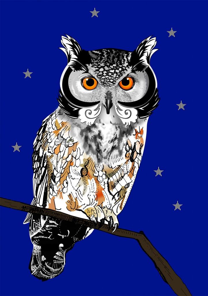 Illustration-owl-03