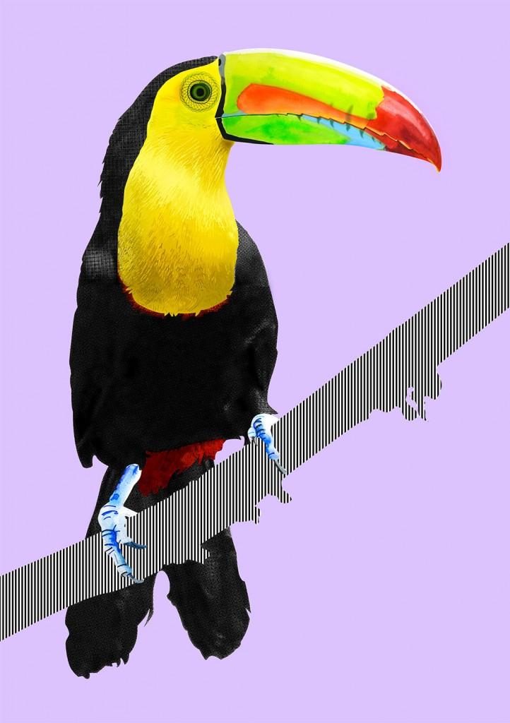 Illustration-toucan-09
