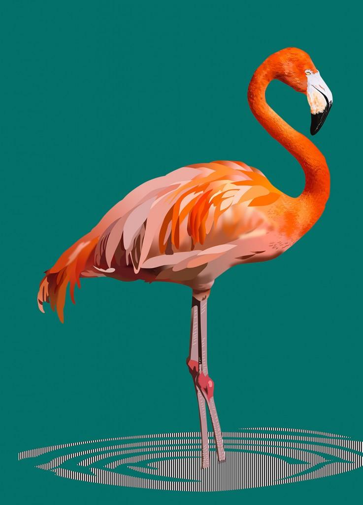 Illustration-flamingo-04