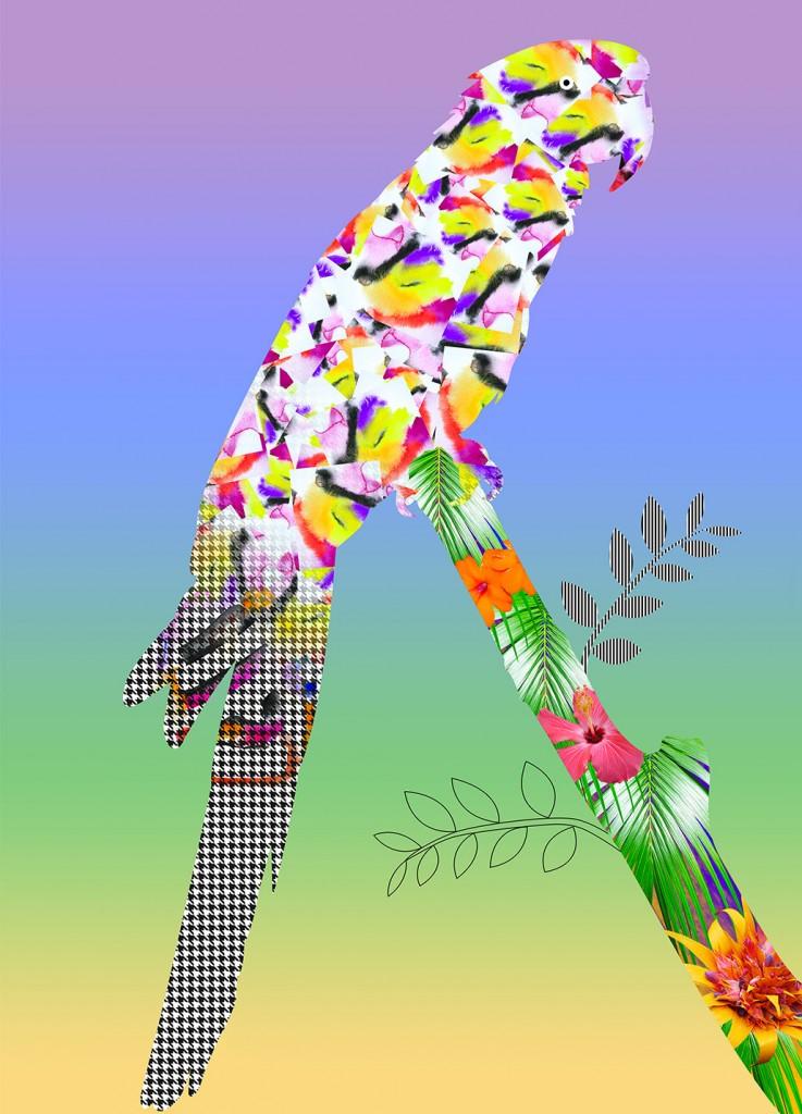 Illustration-parrot-08